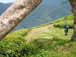 Progetto Rwanda, un anno dopo!! 9