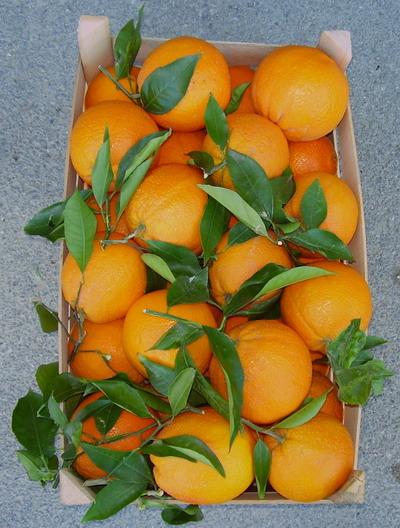 arance.jpg 3