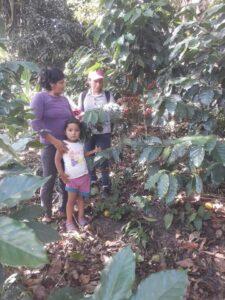 Coltivatori caffè 3